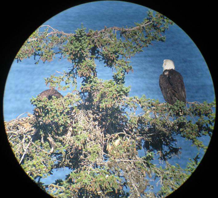 We put the camera on the spotting scope for this one.